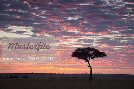Silhouette of tree on plain at sunset, Masai Mara National Reserve, Kenya