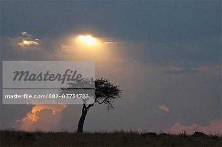 Silhouette of tree on plain, Masai Mara National Reserve, Kenya