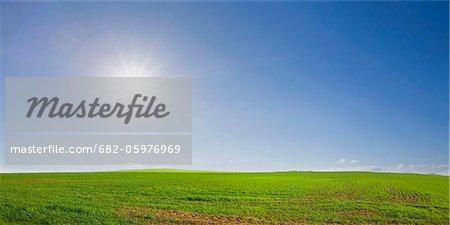 Lush farm meadow on bright morning, Swartland, South Africa