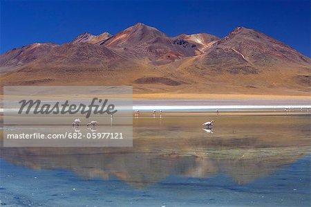 View of flamingos on Laguna Celeste of Southwestern Bolivia, Los Lipez, Bolivia. South America