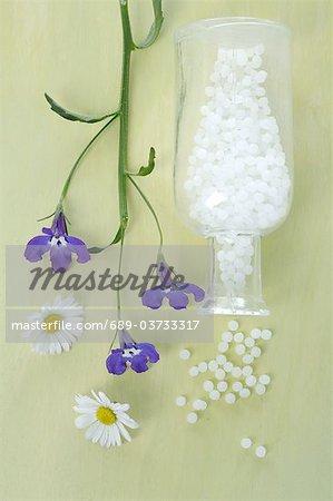 Daisies Globules And Edging Lobelia Stock Photo Masterfile
