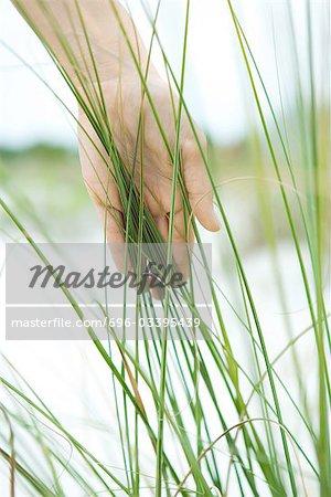 Hand touching dune grass, close-up