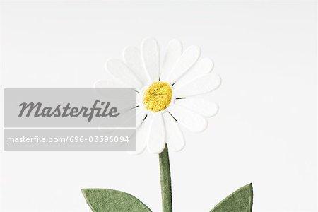 Craft daisy, close-up