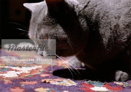 Grey cat on quilt