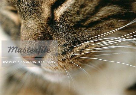 Cat's face, close up.