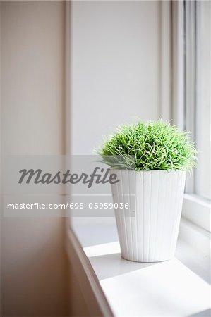 Flowerpot by window