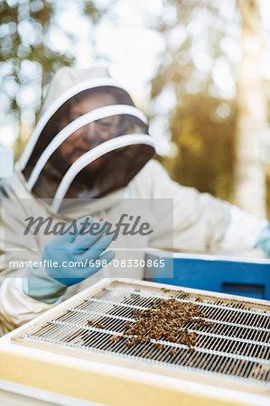 Beekeeper examining beehive on sunny day