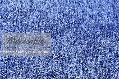 Fresh Snowfall Crowsnest Pass British Columbia, Canada