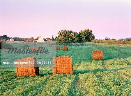 Sunrise over Rural Field Near Sherwood Park, Alberta Canada