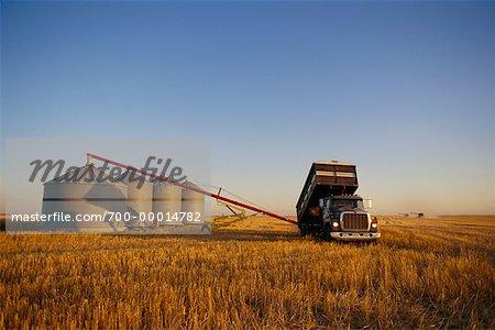 Harvesting Wheat Saskatchewan, Canada