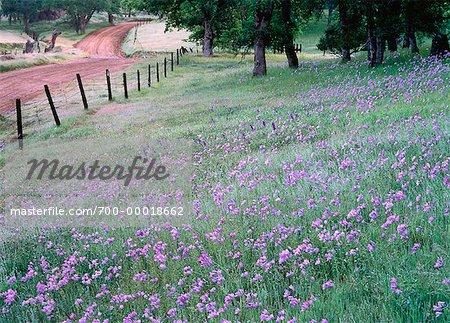 Wildflowers El Dorado Hills, California, USA
