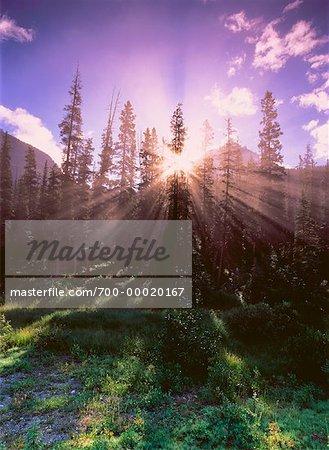 Sunrise through Trees Banff National Park Alberta, Canada