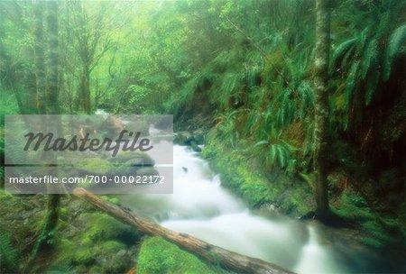 Stream Through Forest Willamette National Forest Oregon, USA