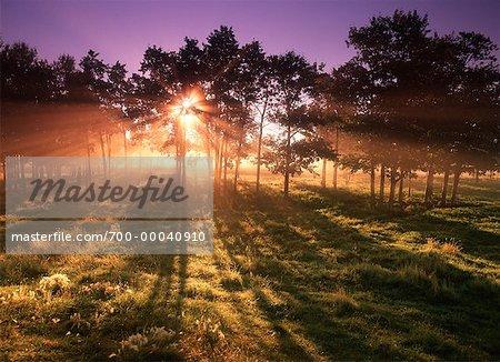 Sunrise through Trees Near Sherwood Park, Alberta Canada
