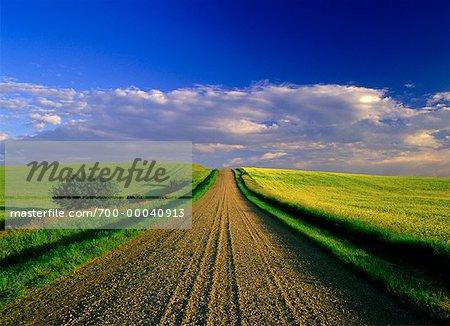 Dirt Road and Sky Near Elk Point, Alberta, Canada