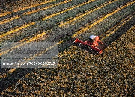Aerial View of Swathing Buckwheat Holland, Manitoba, Canada