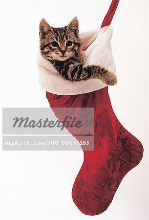 Kitten Christmas.700 00079183