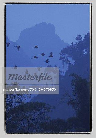 Birds Flying over Trees in Fog Lijiang River, near Guilin Guangxi Region, China