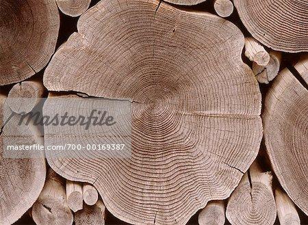 Close-Up of Log Pile