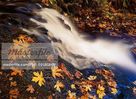 Shepperd's Dell in Autumn Columbia River Gorge Oregon, USA