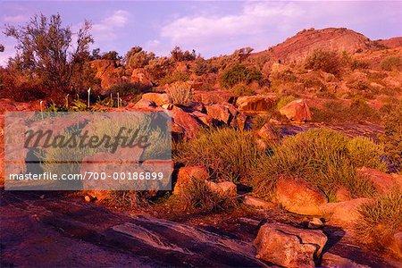 Landscape Namaqualand South Africa