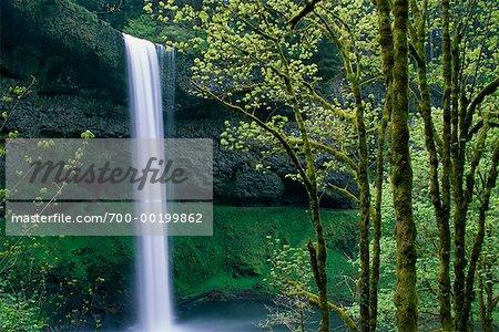 South Falls Silver Falls State Park Oregon, USA