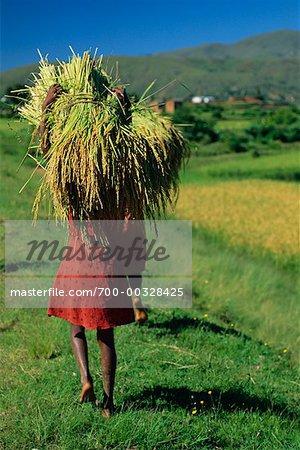 Girl Carrying Bundle of Rice Madagascar