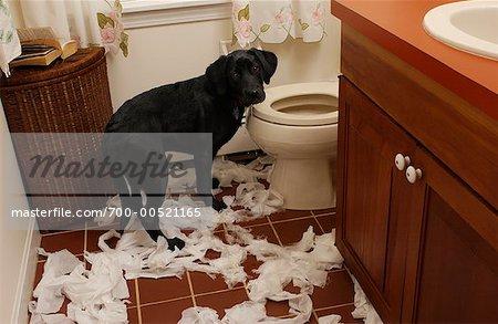 Dog Unrolling Toilet Paper in Bathroom