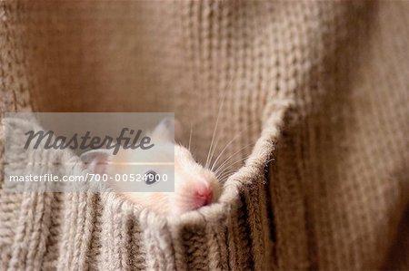 Hamster in Sweater