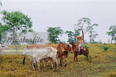 Man Herding Cattle in Pasture, Caiman, Pantanal, Brazil, South America