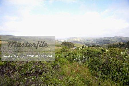 Countryside, Near Half Moon Bay, San Francisco Peninsula, California, USA