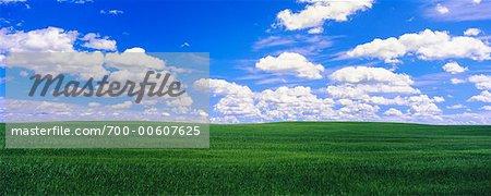Barley Field and Clouds, Crossfield, Alberta, Canada