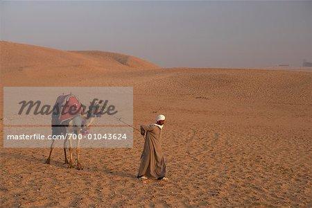 Man Leading Camel in the Desert, Giza, Egypt