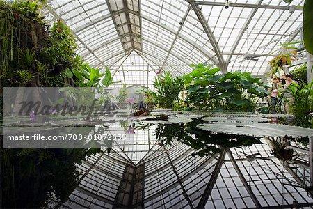 Bon Botanical Garden, Golden Gate Park, San Francisco, California, USA   Stock  Photo