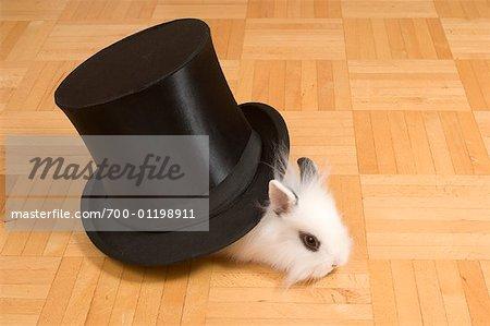 Portrait of Rabbit in Top Hat