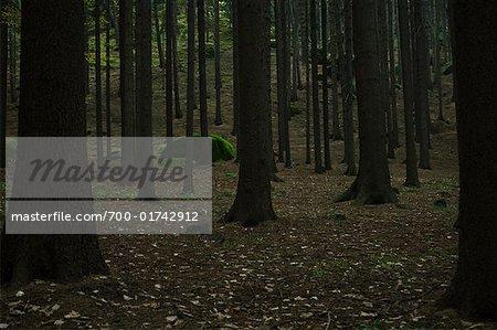 Forest Near Cesky Raj, Czech Republic