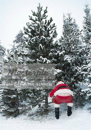 Santa Claus Cutting Down Christmas Tree - Stock Photo - Masterfile ...