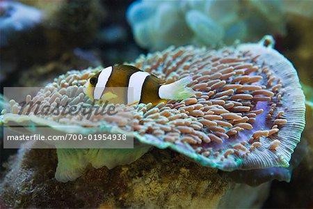 Tropical Fish in Aquarium, Jakarta, Java, Indonesia