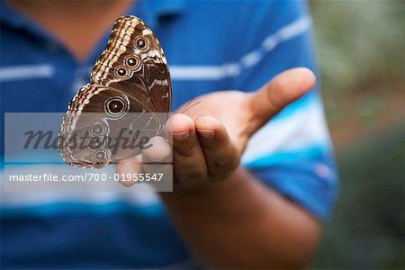 Butterfly in Boy's Hand
