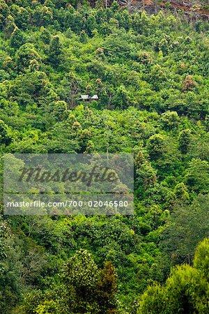 Overview of Mandailing Estate Coffee Plantation, Sumatra, Indonesia