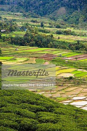 Overview of Rice Terraces and Tea Plantation, Alahan Panjang, Sumatra, Indonesia