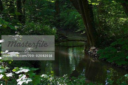 River in Forest, Villeneuve a l'Archeveque, Burgundy, France