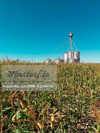 Grain Elevators in Corn Field, Ontario, Canada