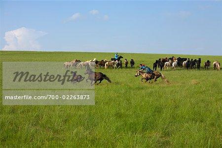 Horsemen Rounding up Horses in Field, Inner Mongolia, China