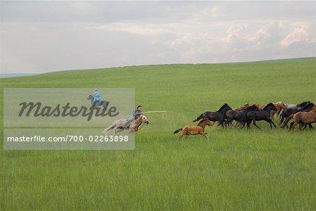 Horseman Herding Horses, Inner Mongolia, China