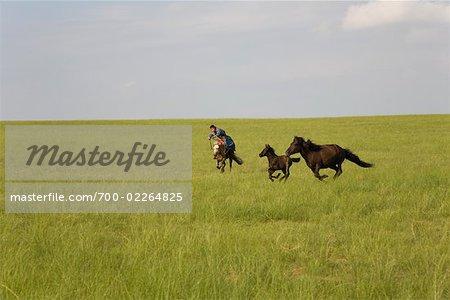 Horseman Chasing Horses, Inner Mongolia, China