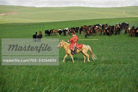 Horseman Rounding Up Horses, Inner Mongolia, China