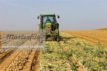 Furrows in Field of Onions, Netherlands