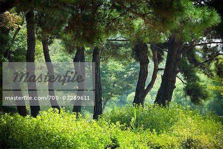 Trees and Bushes, Seonyudo Park, Seoul, South Korea