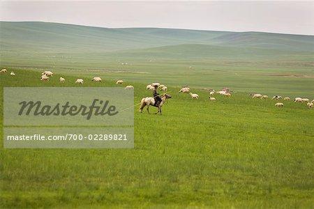 Shepherd on Horseback by Flock, Inner Mongolia, China